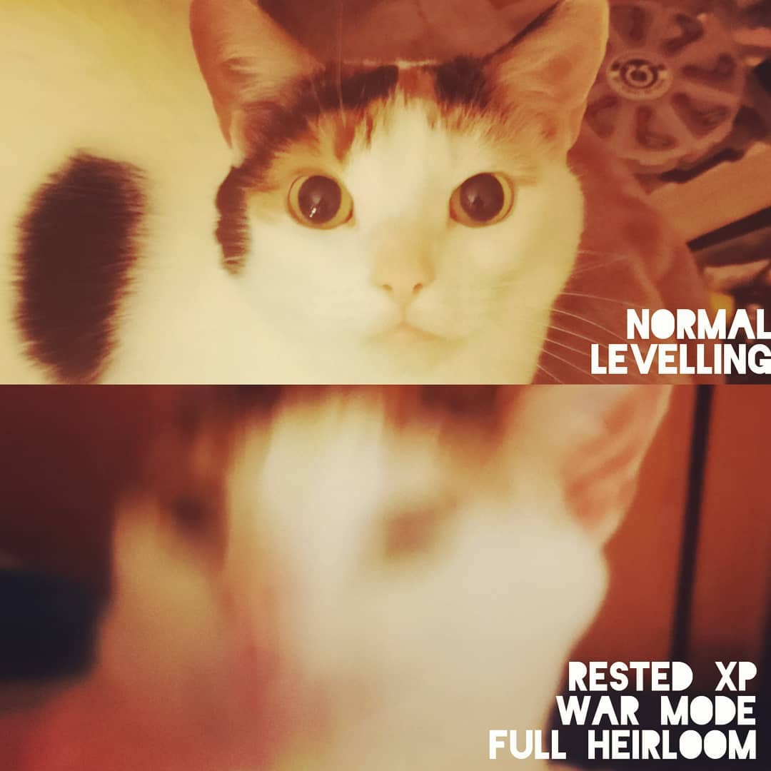 Pixel the cat levelling in  like... . . . . . . . .                         ... 2