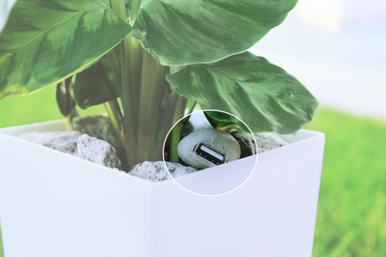 plant that charges your phone