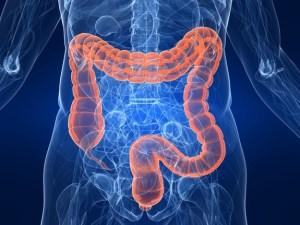 gastrointestinal-tract