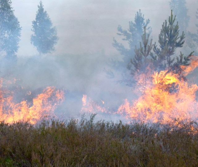 Colorado Wildfire Preparedness Guide