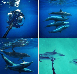 RYOT filmed a VR wild dolphin PSA with the 360Abyss.