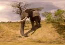 Photos of Africa creates Safari VR