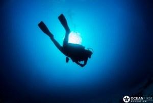 Ocean First Diver