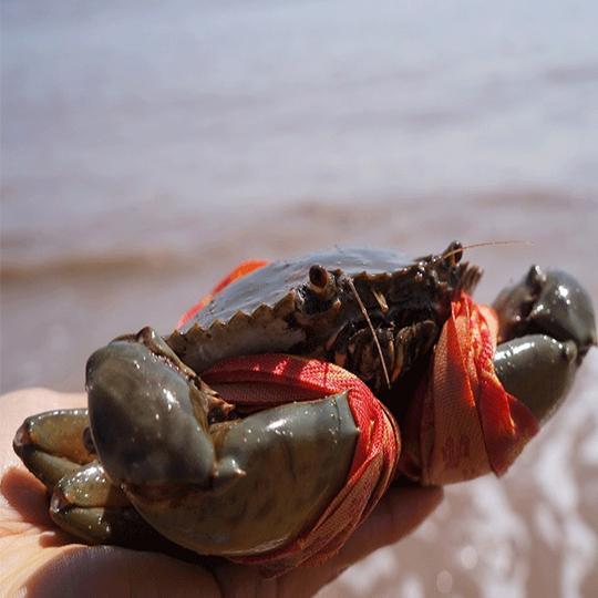 活螃蟹如何保存才能活得時間久(這幾個方法簡單實用)-聞蜂網
