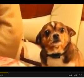 capture vidéo chien triste pour 365 le Jeu
