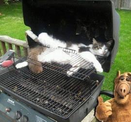barbecue Alf pour 365 le Jeu