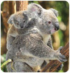 Armchair Travel Club with 365 Care - Western Sydney