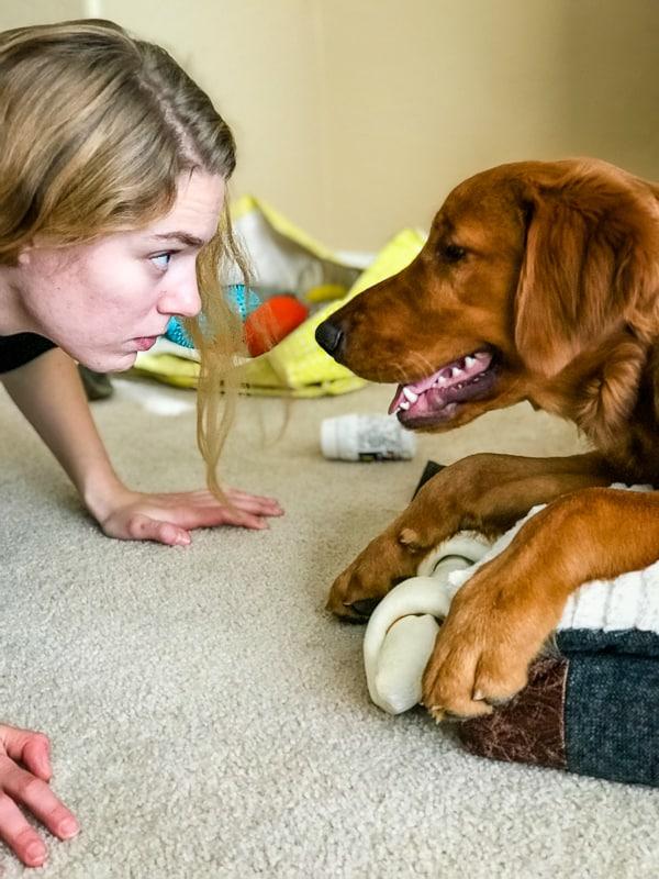 Logan the Golden Dog staring at Emma.