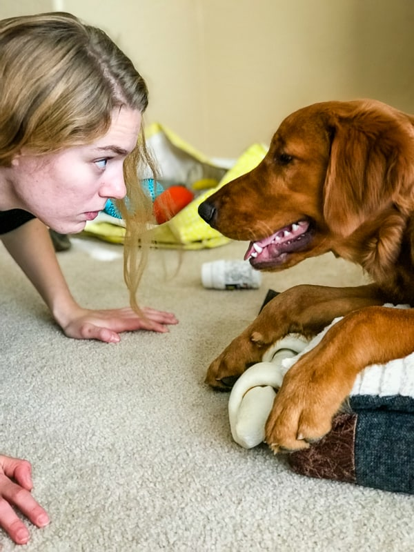 Logan the Golden Dog staring at Emma.