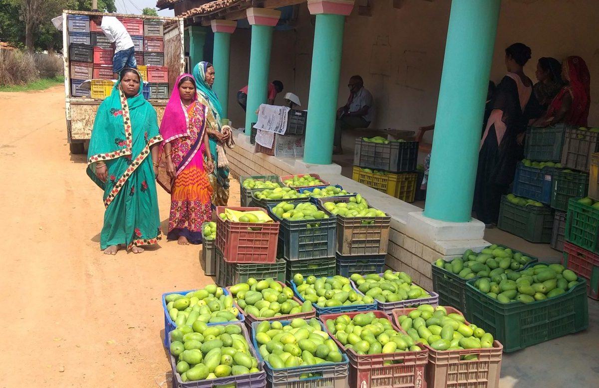 रायगढ़ : बिहान से जुड़ी महिलाओं ने 20 टन आम बेचकर कमाये साढ़े पांच लाख रुपये