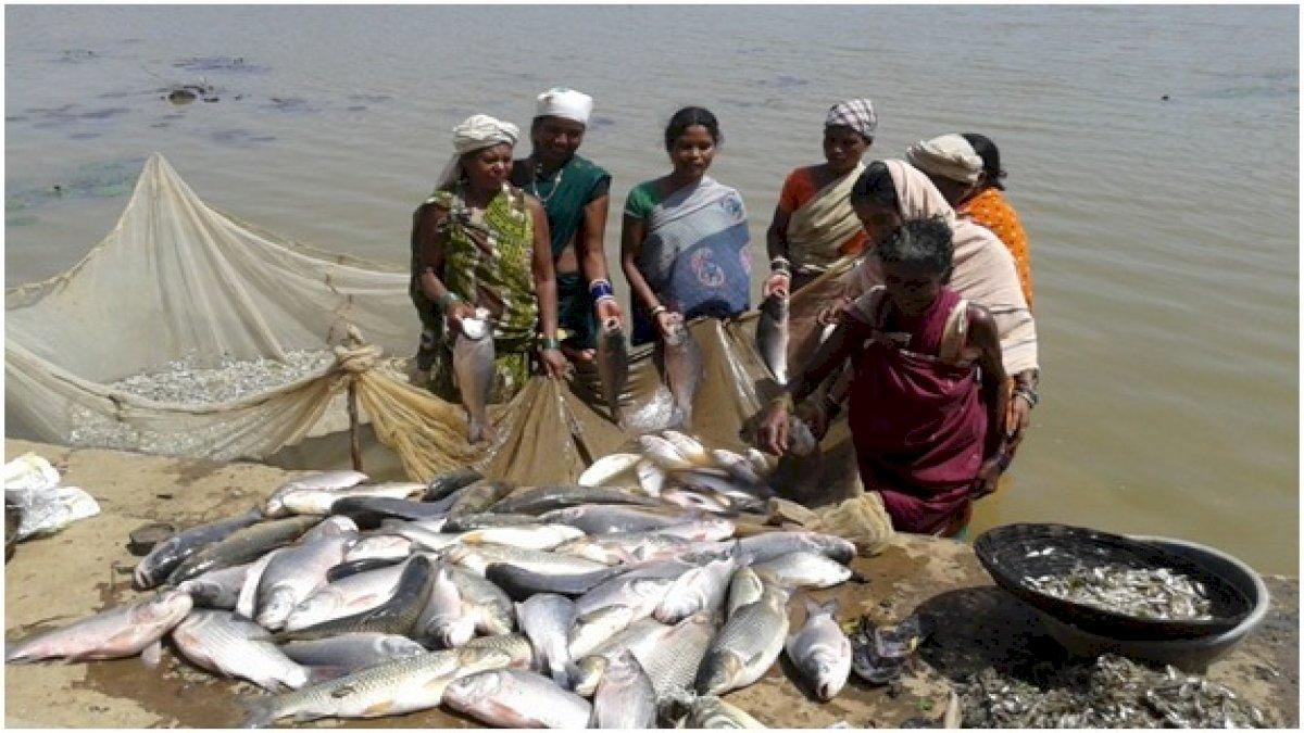 मछली पालन को कृषि का दर्जा, मत्स्य किसानों को मिलेगा पानी बिजली फ्री