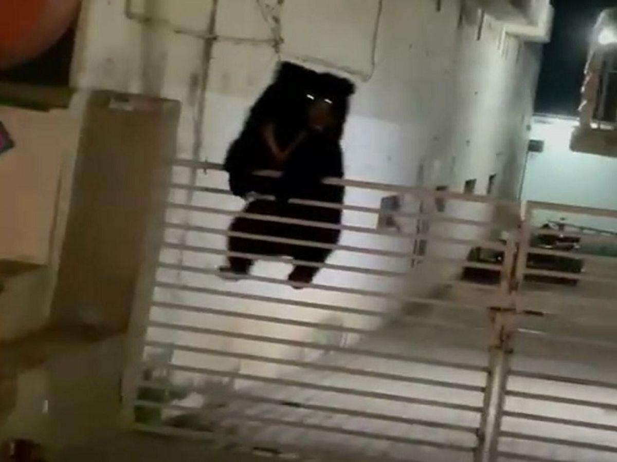 लोहे के गेट को फांद कर पहुंचा भालू