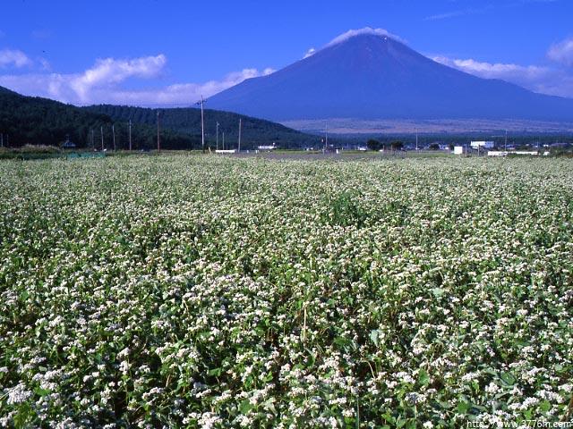 蕎麦と富士/忍野村