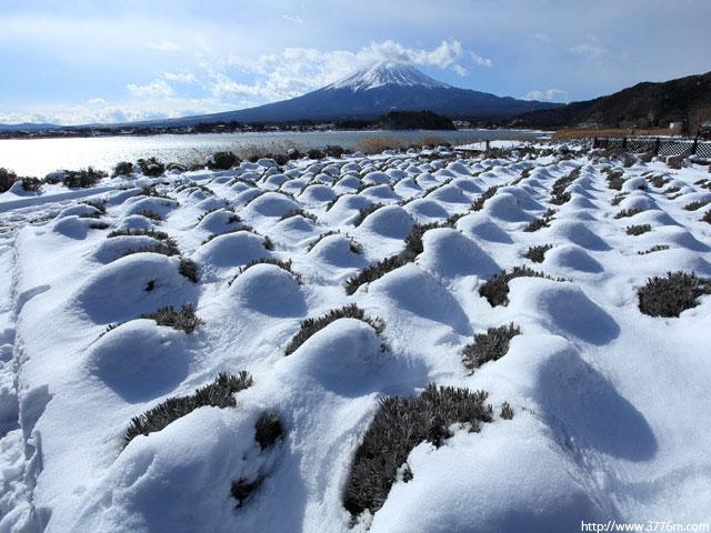雪の墓標/河口湖
