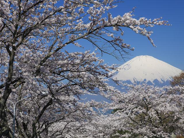 桜の彼方に/平和公園