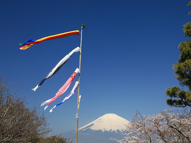 コイノボリと桜/平和公園