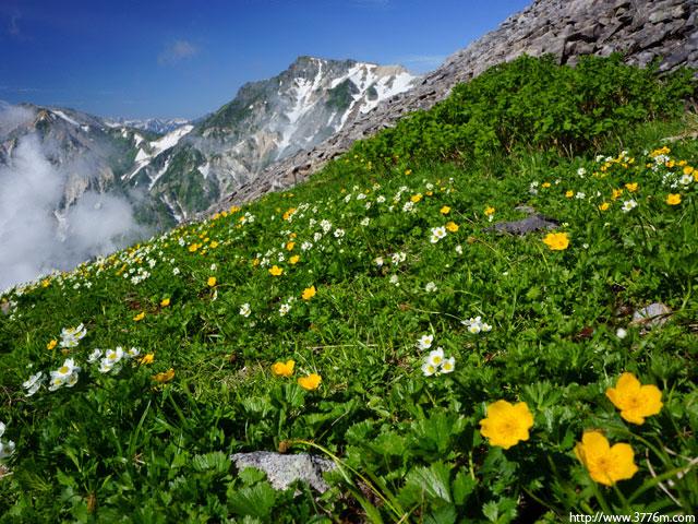 お花畑/白馬乗鞍岳稜線