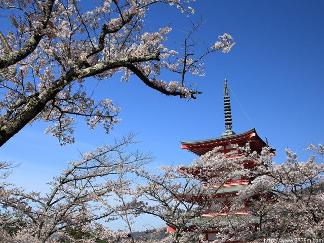 忠霊塔の春/浅間神社