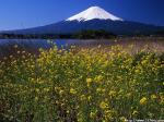菜の花咲く河口湖