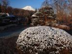 プチ雪景色