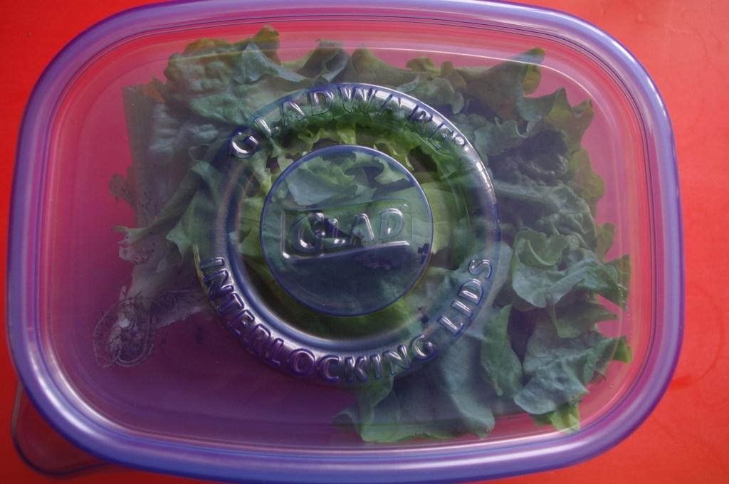storing garden lettuce