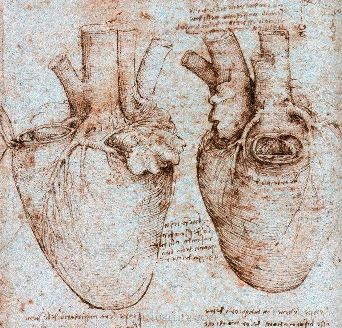 Leonardo da Vinci Anatomy References il cuore