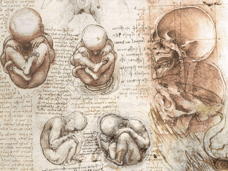 Leonardo da Vinci feto References