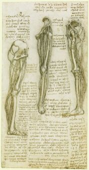 Leonardo da Vinci venous system