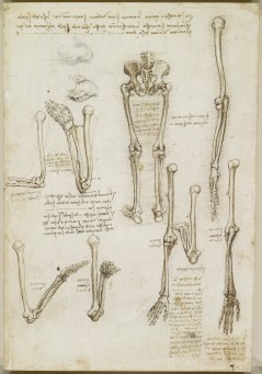 Recto: The bones of the arm and leg. Verso: The surface anatomy