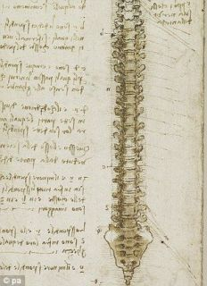 The anatomical study by Leonardo Da Vinci spine