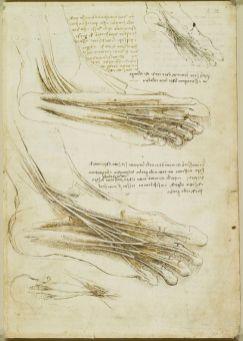 il piede referenza anatomica
