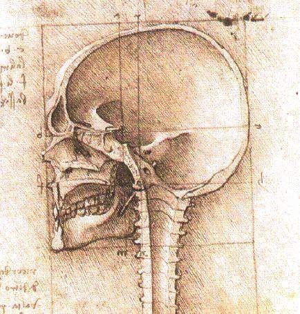 skull-leonardo-da-vinci-reference anatomy