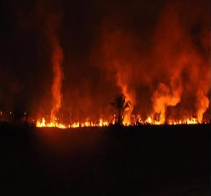 Bombeiros alertam para incêndios em vegetação que pode provocar tragédia.
