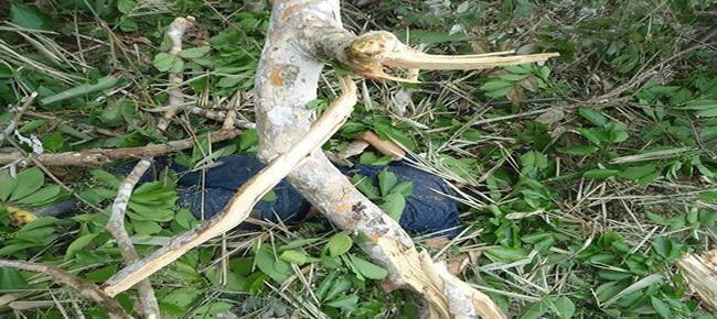 O corpo do jovem ficou preso embaixo da seringueira, o irmão informou que alcebiades morreu no hora do impacto com a árvore