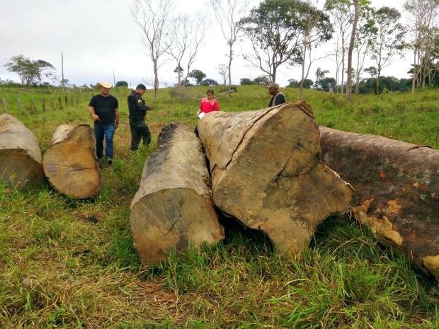 Nos locais, os policiais encontraram carga de madeira pronta para ser beneficiada (Foto: Divulgação da polícia)