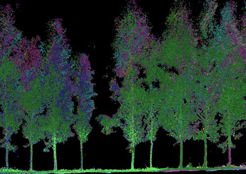 point cloud of forest