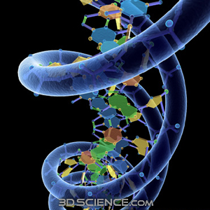 The beautiful double helix