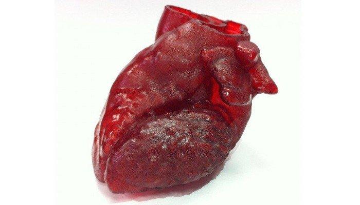 3d printed organs heart replica