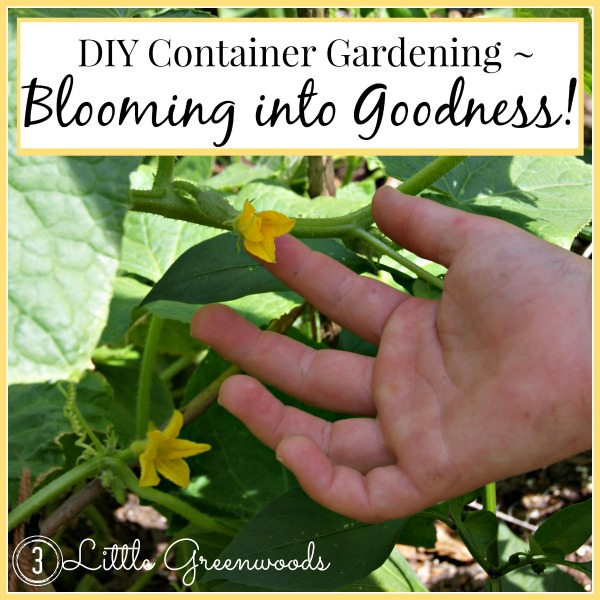 DIY Container Gardening ~ Blooming into Goodness by 3 Little Greenwoods