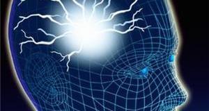 المخ البشرى أو الدماغ