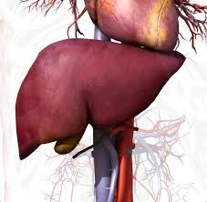ما هو علاج الاستسقاء الناتج عن تليف الكبد