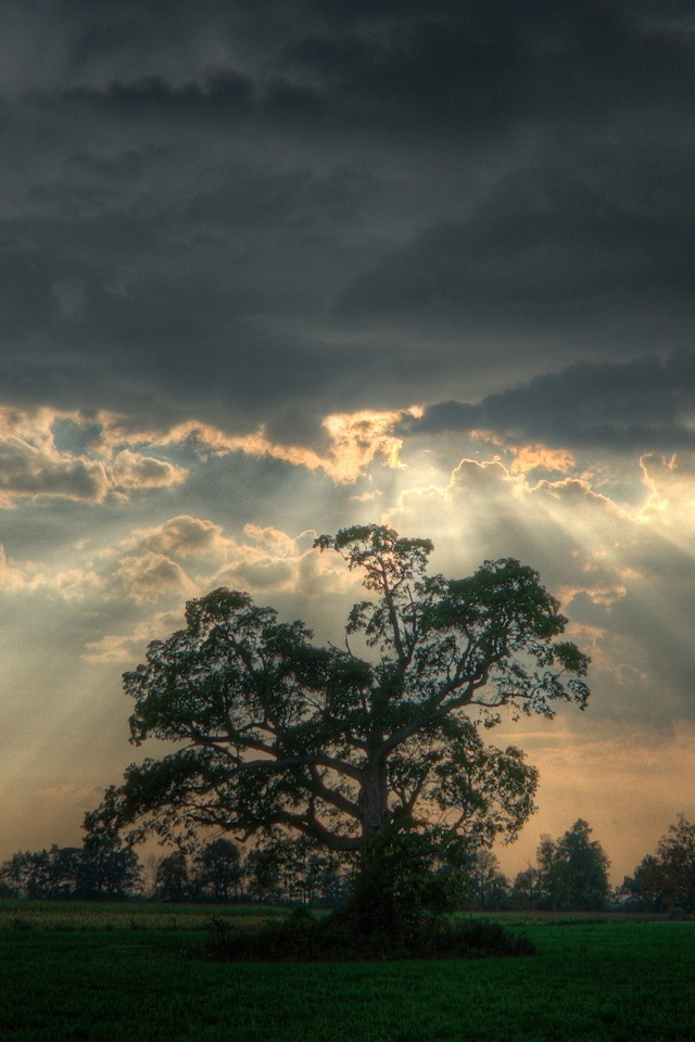 hd wallpapers 1080p pic gallery Shafts of sunlight on the tree
