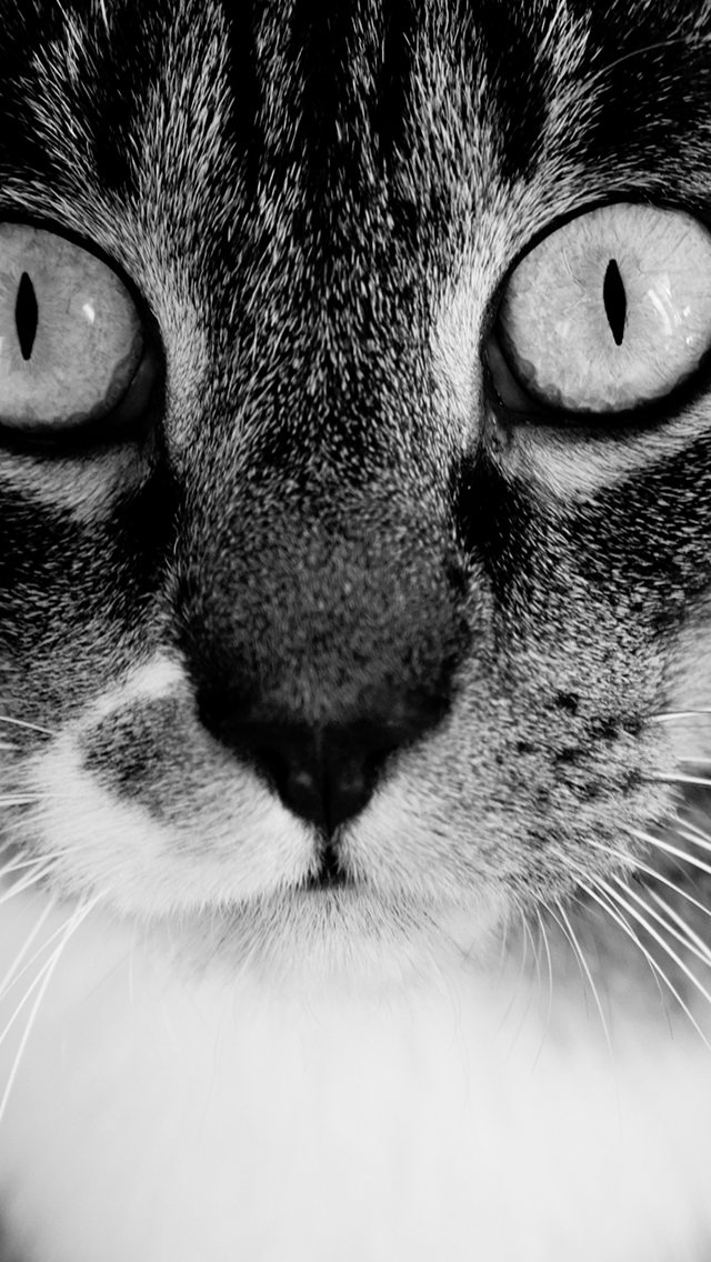 Black and White Cat 3Wallpapers iPhone Black and White Cat