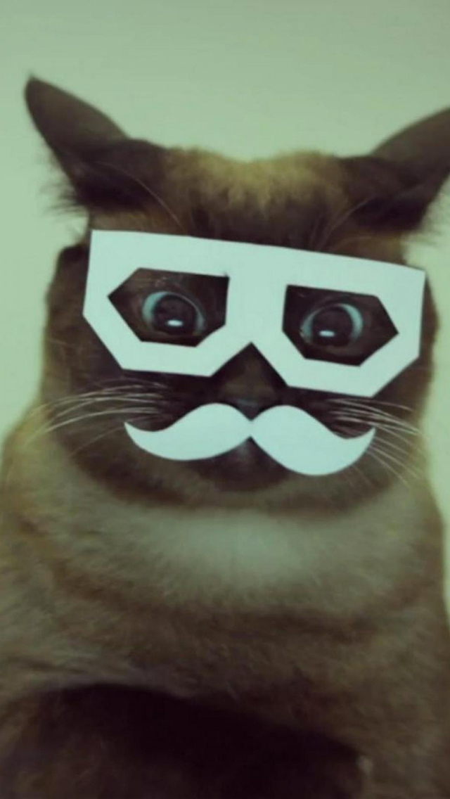 Mustache Cats 3Wallpapers iPhone Mustache Cats