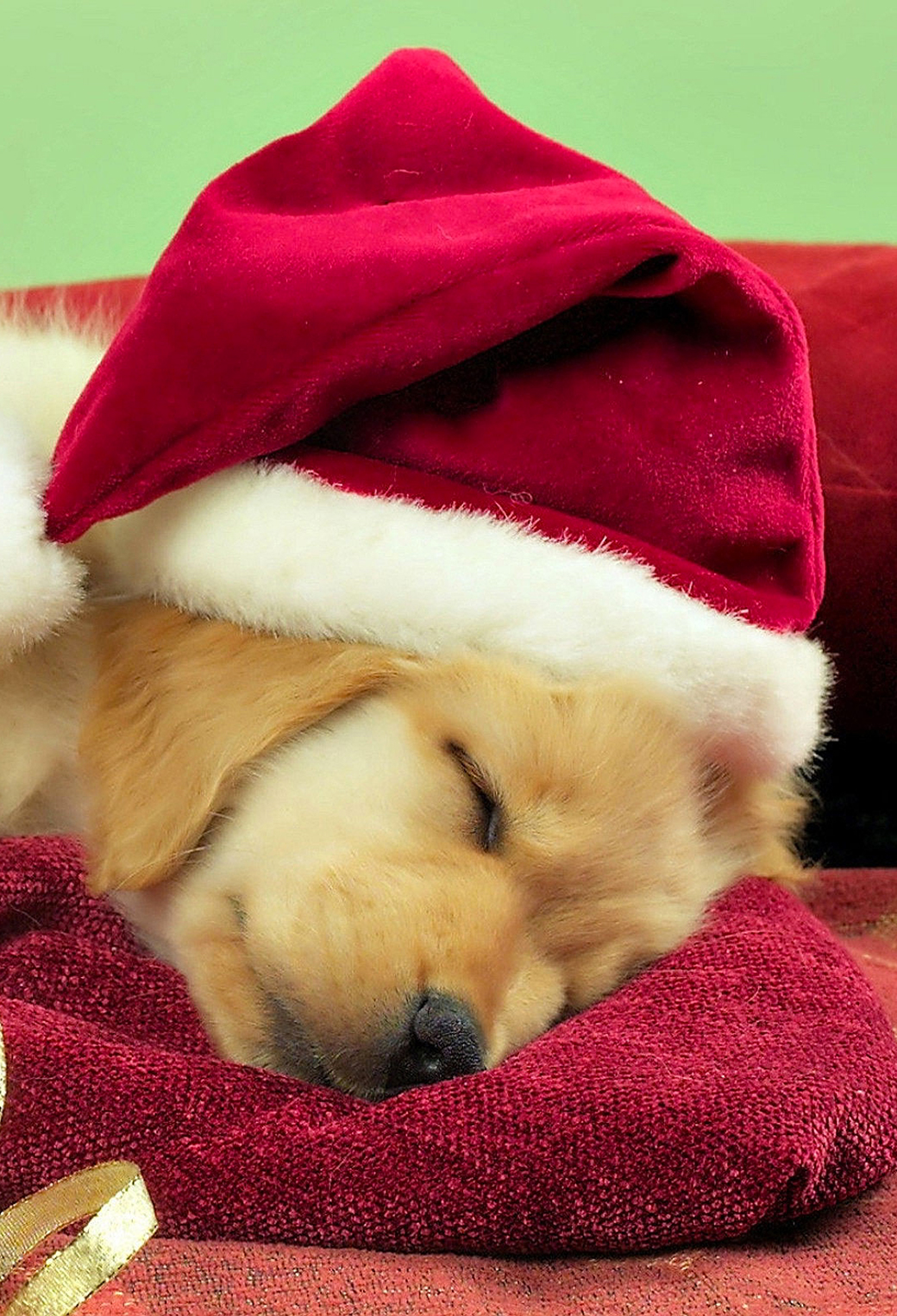 Christmas Puppies3Wallpapers iPhone Parallax Christmas Puppies
