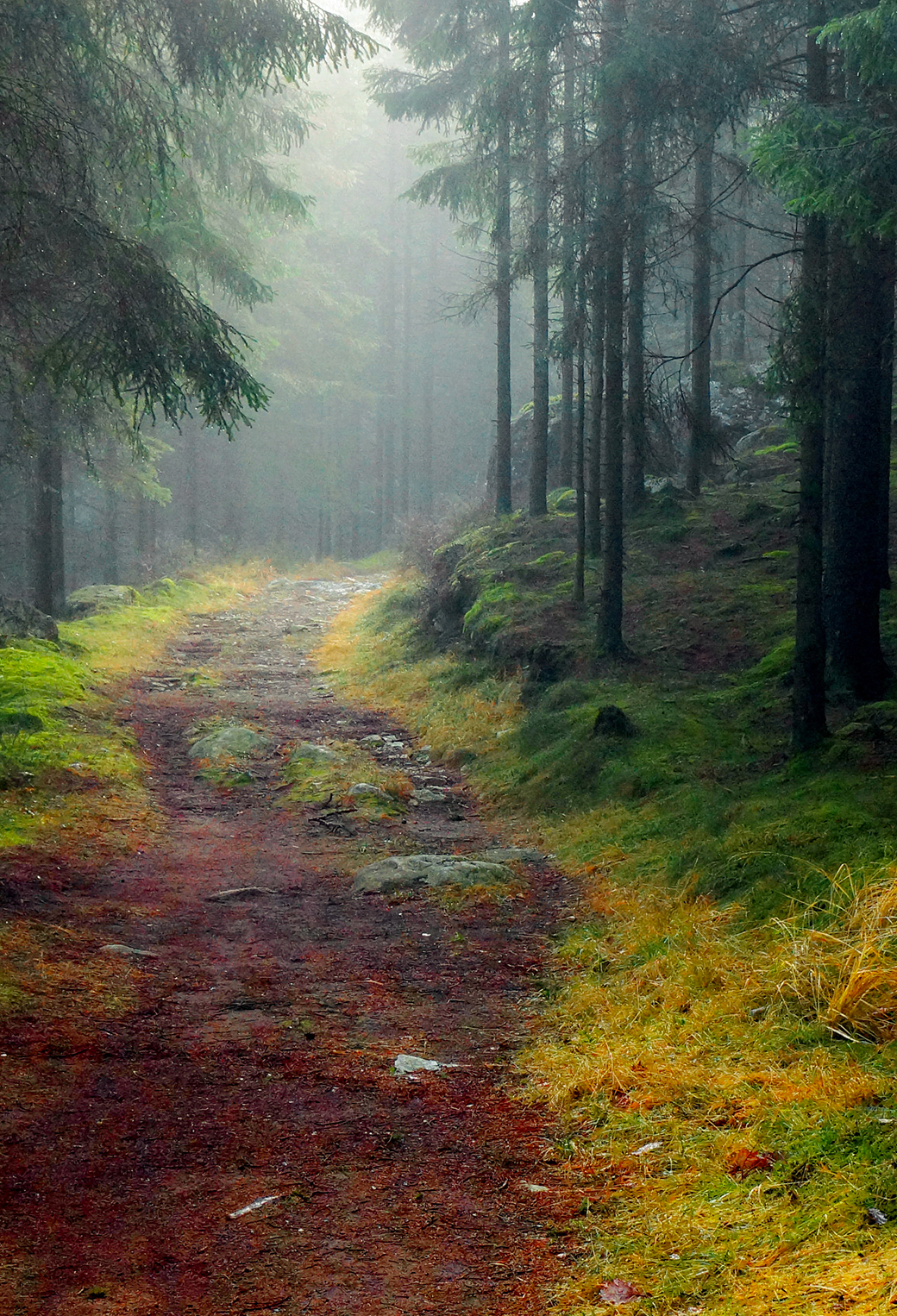 Forest Road 3Wallpapers iPhone Parallax Forest Road