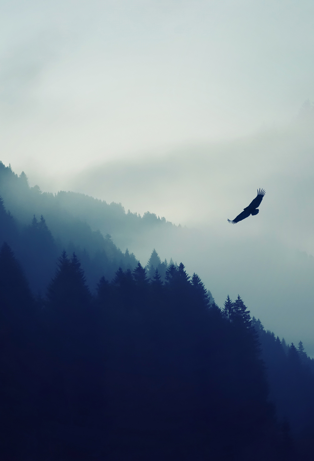 Animals Birds Eagle in the Fog 3Wallpapers iphone Parallax Animals Birds Eagle in the Fog