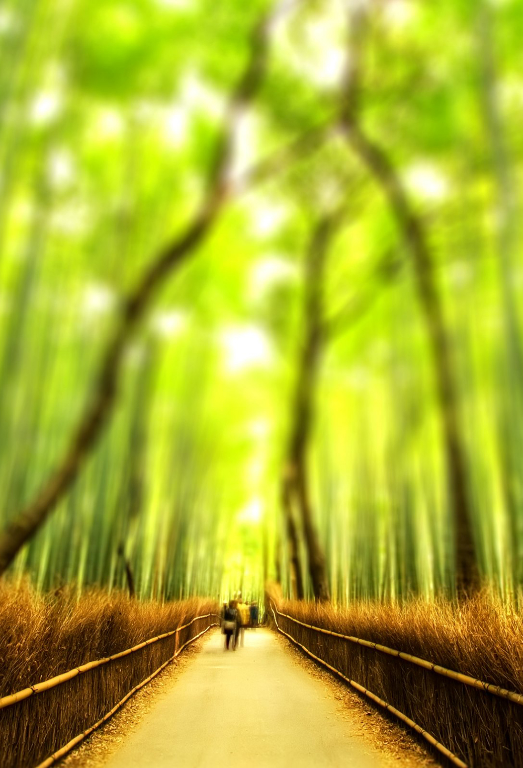 Bamboo Forest 3Wallpapers iPhone Parallax Bamboo Forest