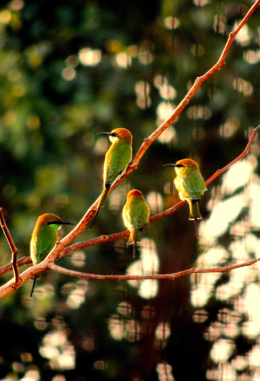 Goria Birds 3Wallpapers iPhone Parallax Goria Birds