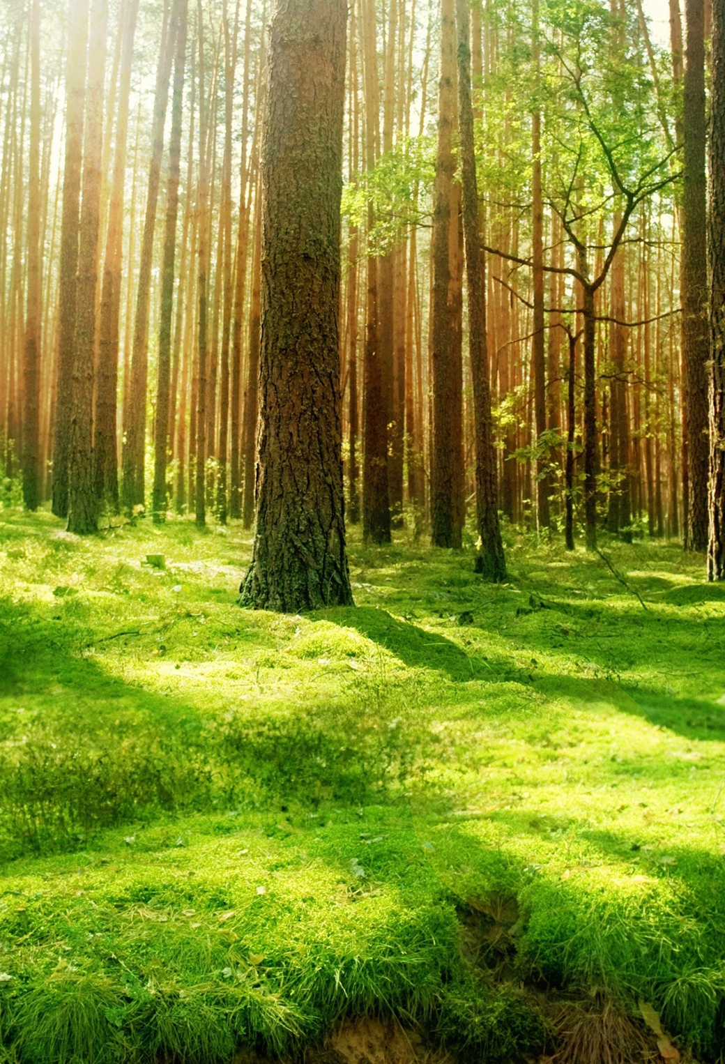 Beautiful Forest Scenery 3Wallpapers iphone parallax Beautiful Forest Scenery